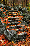 Virginia Photos - Fall Steps - ap by Dan Carmichael