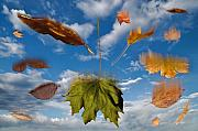 Leaves Digital Art Originals - Fall by Steve Gadomski