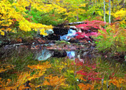 Fall Colors Autumn Colors Posters - Fall Stream Greeting Card Poster by John Rizzuto