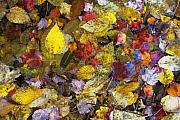 Colorfull Photos - Fall Tapestry by Tom  Wray