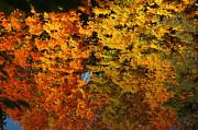 Fall Textures In Water Print by LeeAnn McLaneGoetz McLaneGoetzStudioLLCcom