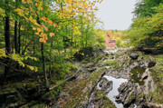 Fine Art Greeting Cards Art - Fall Time in Vermont by James Steele