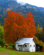 Shed Digital Art Posters - Fall tree white shed. Poster by Bill Linn
