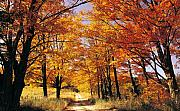 Country Scene Framed Prints - Fall Trees and Lane Framed Print by John  Bartosik
