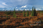 Crepuscular Rays Prints - Fall Tundra of Denali Print by Sandra Bronstein