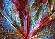 Autumn Leaf Photos - Fall Up Close by Gwyn Newcombe