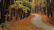 Destiny Metal Prints - Fall Winding Road Metal Print by John  Bartosik