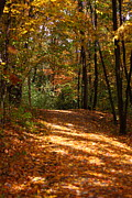 Kevin Schrader Metal Prints - Fall Woods Metal Print by Kevin Schrader