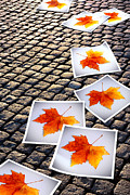 Cobblestone Prints - Fallen Autumn  prints Print by Carlos Caetano