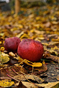 Vivid Fall Colors Art - Fallen Fruit by Susan Herber