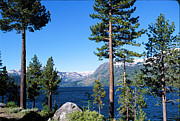 Fallen Leaf Photos - Fallen Leaf Lake Area With Pine Trees In Foreground, Lake Tahoe, California, Usa by Ellen Skye