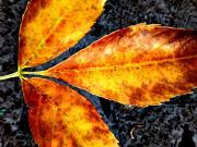 Fallen Leaves Print by Beth Akerman
