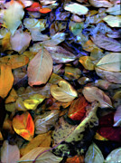 Den Mixed Media Prints - Fallen Leaves Print by Don Wright