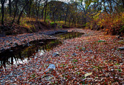Dry Creek Photos - Fallen Leaves by Fred Lassmann