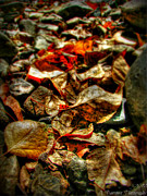 Prescott Framed Prints - Fallen Leaves HDR Framed Print by Aaron Burrows