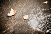 Heavy Metal  Photos - Fallen leaves by Kati Molin