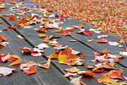 Seasonal Art - Fallen Leaves by Lisa  Phillips