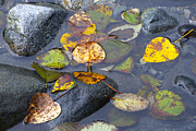 Water In Creek Posters - Fallen Leaves of Autumn Poster by Sharon  Talson