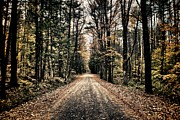 Dirt Roads Photo Prints - Fallen Road Print by Nathan Larson