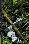 Arlyn Petrie Metal Prints - Fallen Tree Falls Metal Print by Arlyn Petrie