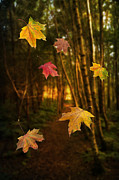 Red Maple Trees Posters - Falling Leaves Poster by Christopher and Amanda Elwell
