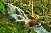 Adam Jewell - Falling Through The Woods