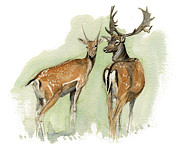 Deer Prints - Fallow Deer Print by Chris Pendleton