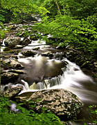 Great Smokey Mountains Prints - Falls at Tremont Great Smokey Mountains NP Print by Brian Stamm