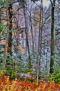 Fall Scenes Metal Prints - Falls First Metal Print by Emily Stauring