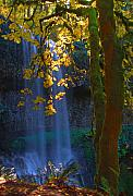 Fall Leaves Prints - Falls in the Fall Print by Dale Stillman
