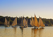 Luxor Prints - Faluccas on the Nile Print by Mary Machare