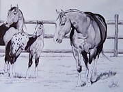 Quarter Horse Drawings Framed Prints - Family Framed Print by Cheryl Poland