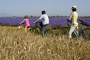 Three People Photo Framed Prints - Family contemplating lavender field during bicycle trip Framed Print by Sami Sarkis