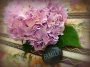 Cindy Wright Photos - Family Hydrangea Floral by Cindy Wright