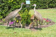 Cranes Prints - Family Meal Time Print by Carol Groenen