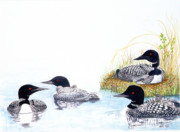 Ducks Paintings - Family of Loons by Pauline Ross