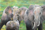 Elephants Drawings - Family Outing by Arline Wagner