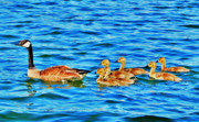 Goslings Framed Prints - Family Outing Framed Print by Emily Stauring