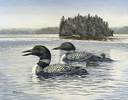 Loon Painting Framed Prints - Family Outing Framed Print by Richard De Wolfe