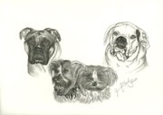 Boxer Drawings - Family Photo by Jennifer Vaughn