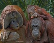 Ape Photo Originals - Family Portrait by Larry Linton