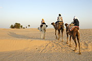 45-49 Years Prints - Family riding three camels in desert Print by Sami Sarkis