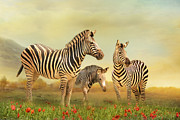 Zebra Mixed Media - Family Ties by Trudi Simmonds
