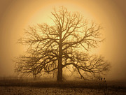 Rural Indiana Prints - Family Tree Print by Mark Orr