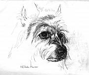 Terriers Framed Prints - Fancy - head study Framed Print by Norma Rowley