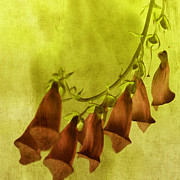 Tangerine Digital Art Posters - Fancy Foxglove Poster by Bonnie Bruno