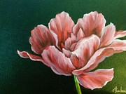 Anne Barberi - Fancy Tulip