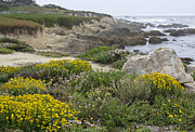 Scenic Drive Prints - Fanshell Overlook - Pebble Beach California Print by Brendan Reals