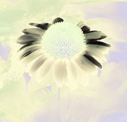 Muted Prints - Fantasy Daisy IV Print by Karen Lewis
