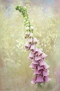 Digitalis Framed Prints - Fantasy Framed Print by Jacky Parker